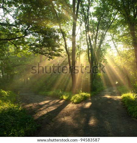Green landscape with sun rays shining through branches of trees, forest landscape