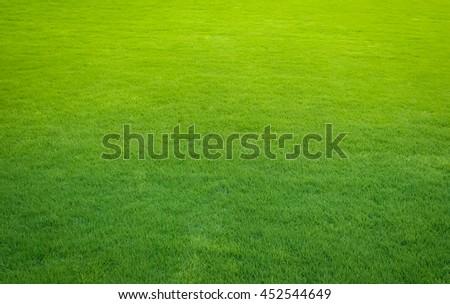 green lawn,backyard for background - Shutterstock ID 452544649