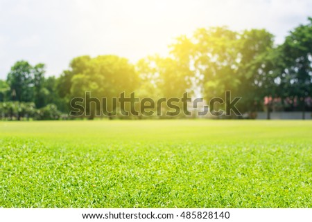 Green lawn blur and soft light #485828140