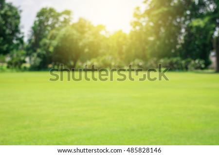 Green lawn blur and soft light - Shutterstock ID 485828146