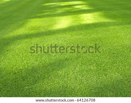 Green lawn, closely mowed as grass background