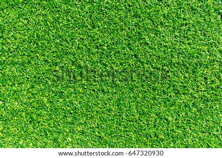 Green lawn for background. Green grass background texture.  top view.  #647320930