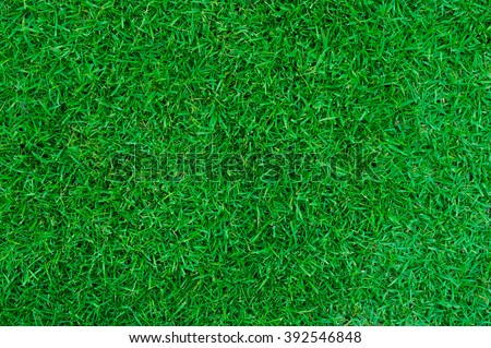 Green lawn for background, Green grass texture.