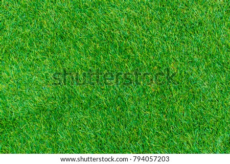 Green lawn for background. Green grass texture background.  top view. - Shutterstock ID 794057203