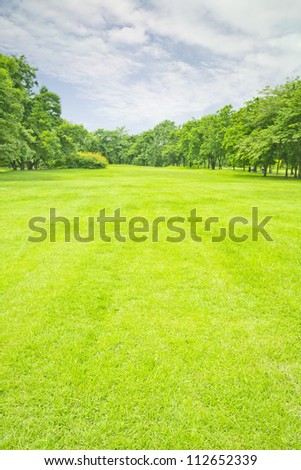 Green lawn in city park