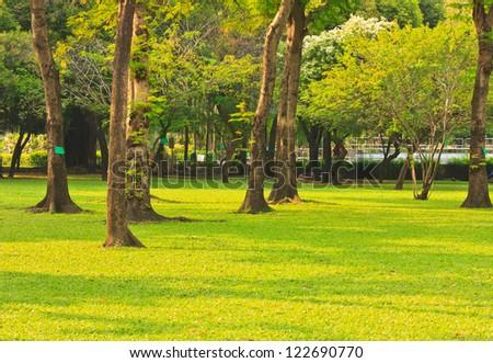 Green lawn in city park under sunny light