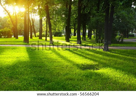 Green lawn in city park under sunny light