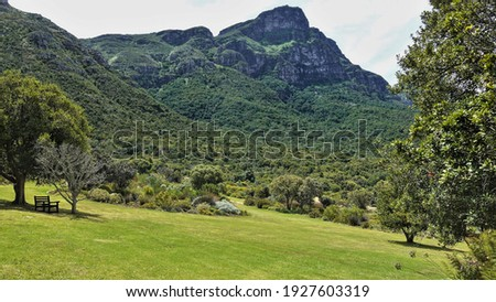 Green lawn on the hillside in the park. There is a bench under a shady tree. There are picturesque tropical plants in the flowerbed. Wooded mountain range against the sky. Cape Town.                   Сток-фото ©