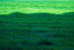 Green lawn part in sunlight and part in shade