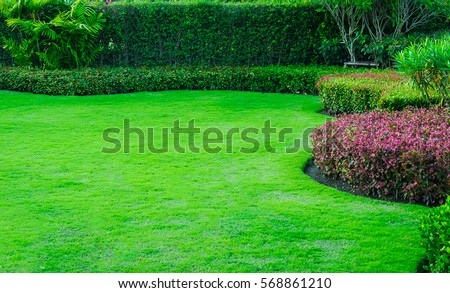 Green lawn, the front lawn for background. #568861210