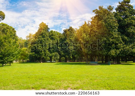 Green lawn- trees in park under sunny light with sun beams