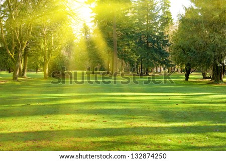Stock Photo Green lawn with trees in park under sunny light