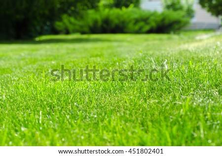 green lawn yard #451802401