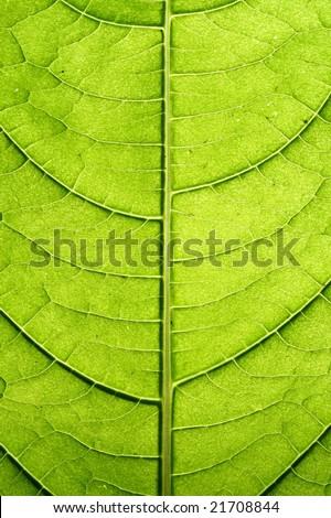 green leaf #21708844