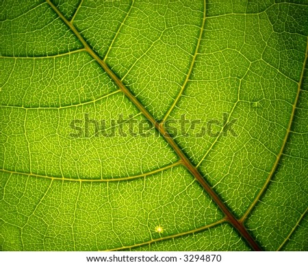 green leaf 3 - stock photo