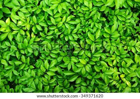 green leaf #349371620