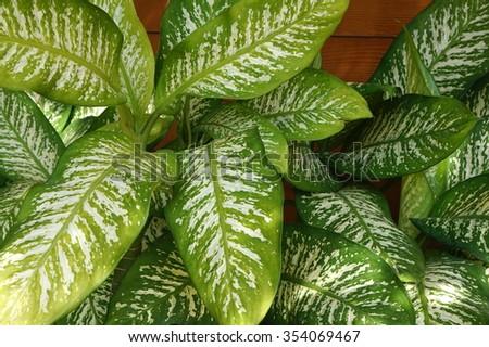 Green leaf - Shutterstock ID 354069467