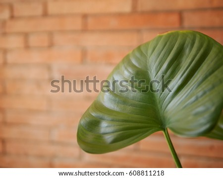 Green leaf #608811218