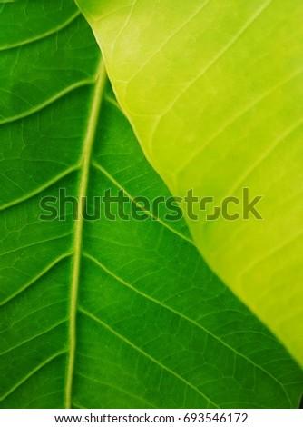 Green leaf #693546172