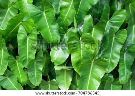 Green leaf #704786545