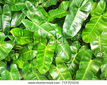 Green leaf #719705026