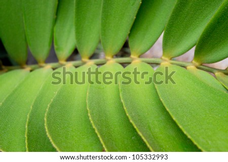 green leaf abstract background