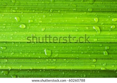 green leaf and dew #60260788