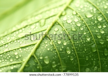 Green leaf and droplets