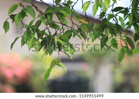 green leaf and tree branch at playground during summer at playground for kids at bright noon. #1149955499