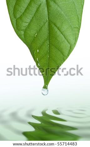 green leaf and water drop with reflection