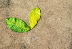 Green leaf and yellow leaf Fall on the floor