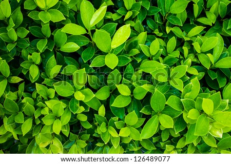 green leaf background #126489077