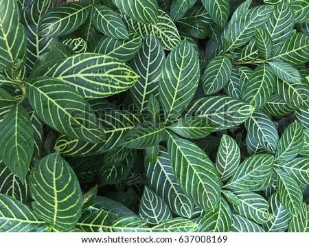 green leaf background - Shutterstock ID 637008169