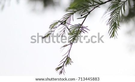Green leaf background #713445883