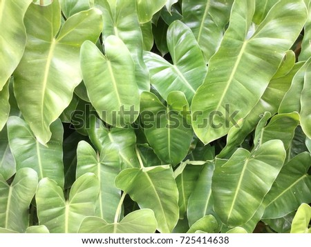 Green Leaf Background #725414638