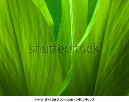 Green leaf background abstract of nature