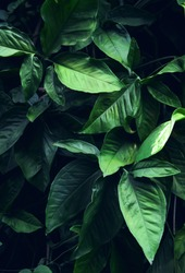Green leaf background. flat lay