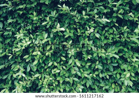 Green leaf background. Green leaf. Green trees background. Green Leaf texture.