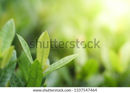 Green leaf background. Nature and Freshness concept  #1337547464