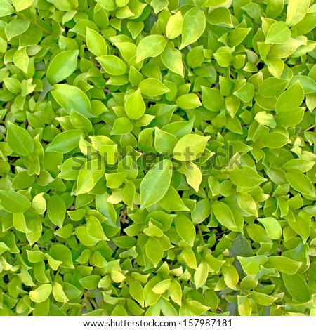 green leaf background. Seamless Tileable Texture
