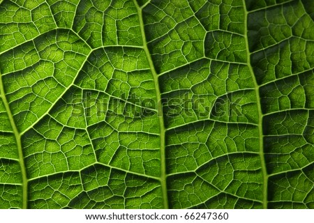 Green leaf background texture, macro - stock photo