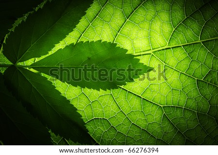 Green leaf background texture, macro