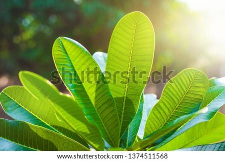 green leaf background, tropical leaf, green leaf in the garden #1374511568