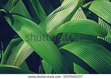 green leaf background with concep design white frame border #1059660197