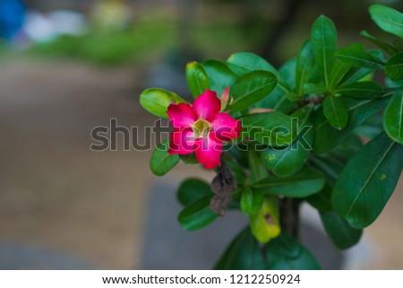 Green Leaf Blossom Chom Phu flowers beautiful. #1212250924