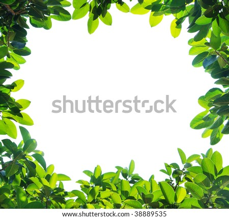 Green leaf border