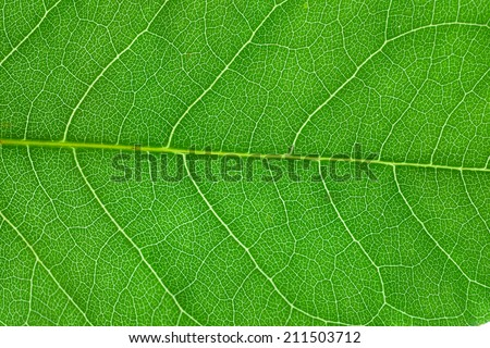 green leaf close up #211503712