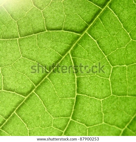 green leaf close up nature background #87900253