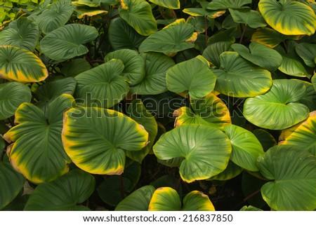 Green leaf close wallpaper picture
