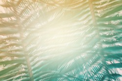 Green leaf coconut palm tree morning sunlight. Green abstract pattern. Tropical climate. Exotic vintage wallpaper. High resolution. Mirror reflection effect.